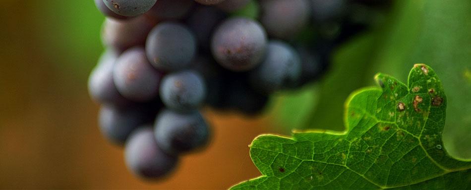 Weine im Alter von Garda Valtenesi Weingut De Zinis